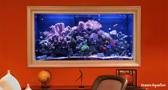 10 Homes With Their Own Shark Tanks Page 2 Digital Trends