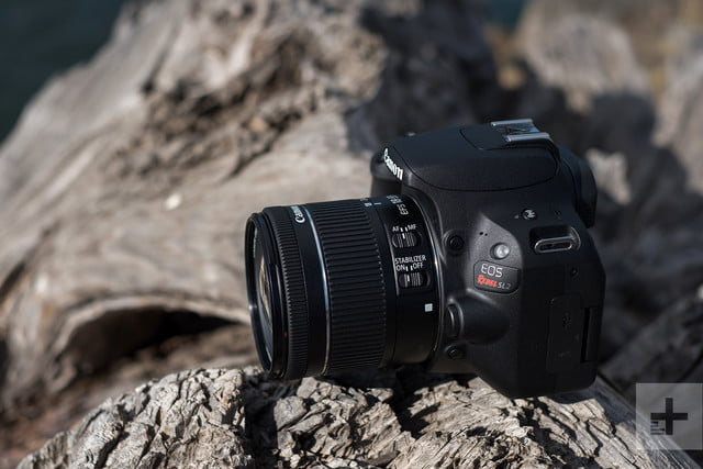 Canon EOS Rebel SL2 review left on tree