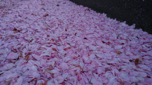 how to use lg g5 manual mode cherry blossoms on ground