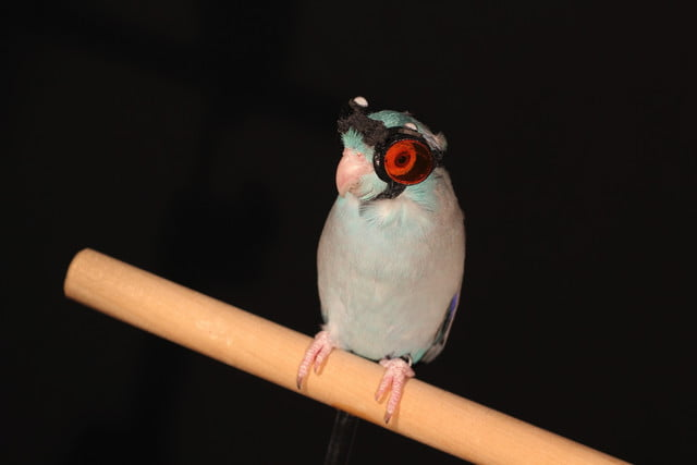 parrot goggles flying robots bird with laser img 9648 2