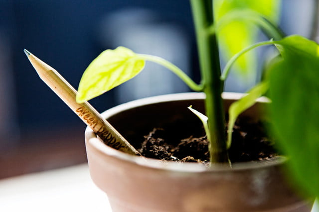 grow a garden with your pencils sprout world europe new3619 highres