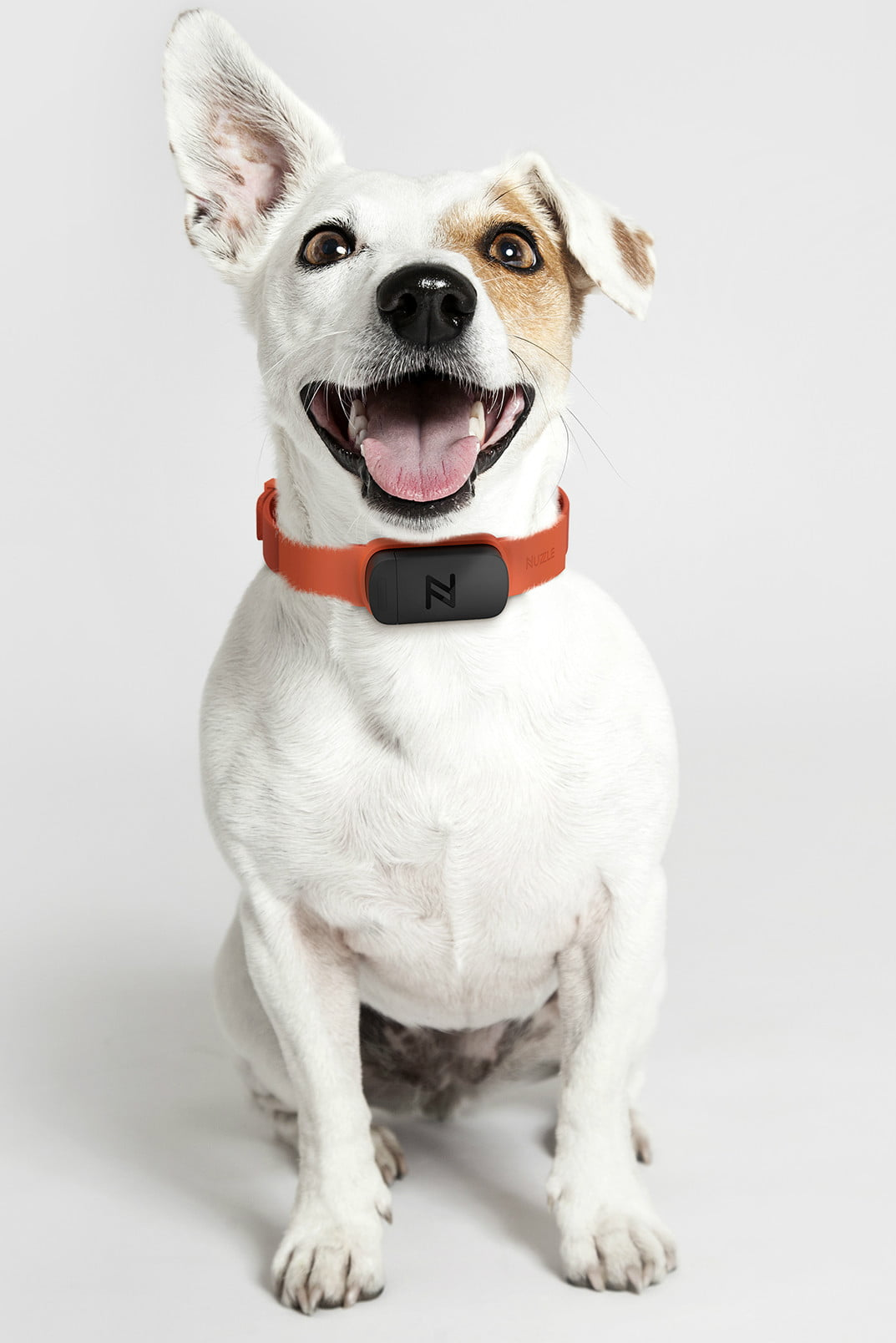 Nuzzle Collar Offers Pet Tracking and Insurance | Digital ...