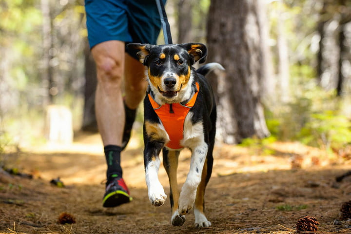 best dog hiking gear Ruffwear Front Range Harness