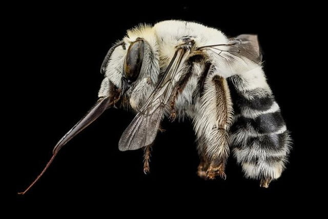high resolution macro photos show amazing details bees wont cure fear bugs sam droge bee 6