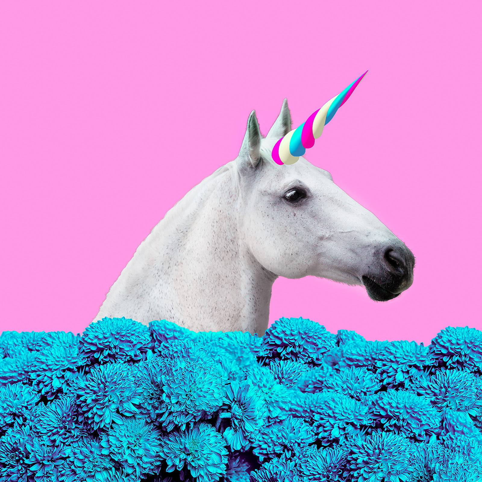 This is a picture of Eloquent Picture of Unicorns