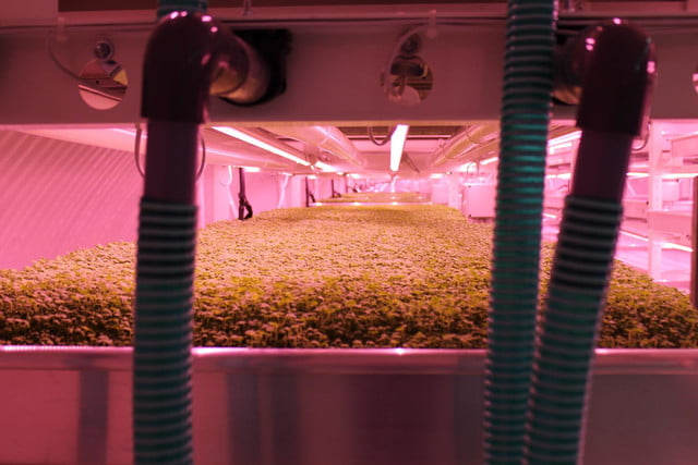 londons underground farm zero carbon food growing tables